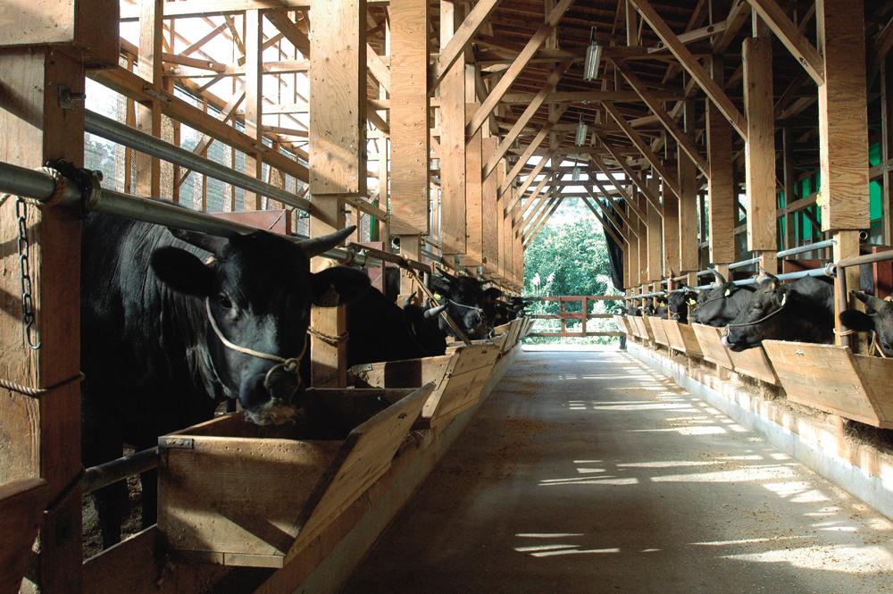 牛舎 010